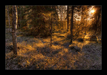 Frost in the Sunlight by FatalBite