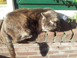 Cat by MisterMonkey95