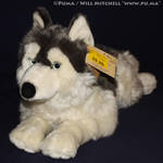 Husky plush by Playkids France by dapumakat