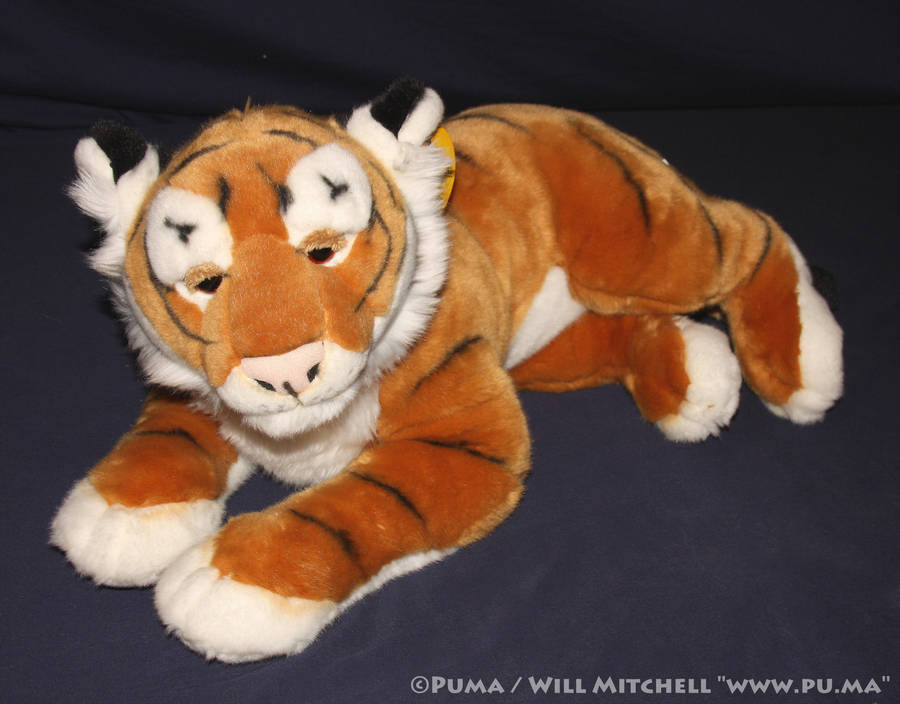 Amiplush Tiger cub plush from Morocco by dapumakat