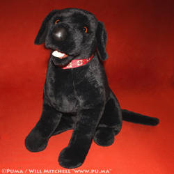 Black Lab plush by Douglas Cuddle Toys - 1990s by dapumakat
