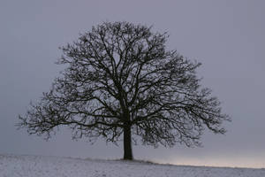 Tree in the snow by archaeopteryx-stocks