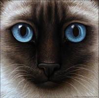 Warrior Cats - Siamese Cat by Wynnyelle