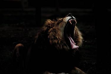 Lion Darkness 1 by NineteenPSG
