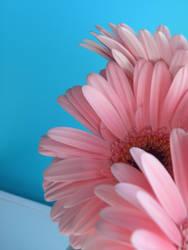 Pretty in Pink by MaverickMae