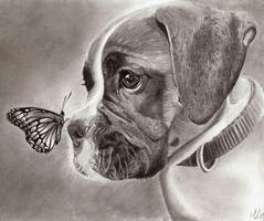 Dog and Butterfly by TeSzu