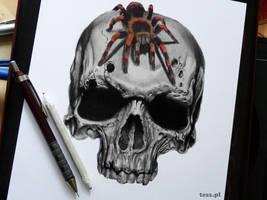 Skull by TeSzu