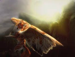 fall into the sun and let the wind fill your wings by Amphispiza