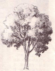 Uncolored Tree by lguan