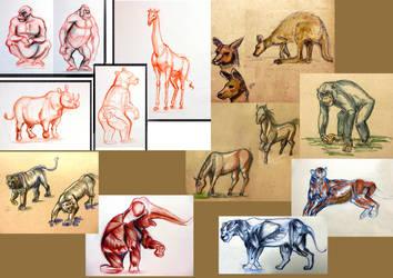 Animal Drawings and studies by Hiyyee