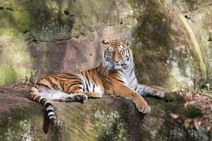 Tiger, Nuernberg II by Areksim