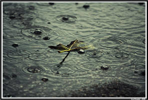 rain leaf by neodium