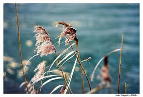 windy life 2 by neodium