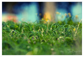 grass bokeh by neodium