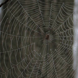 Spiderweb by electrodiglet