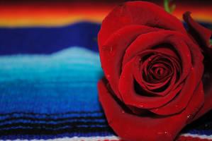 Rose by imveryconfused