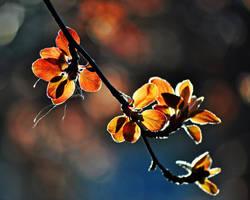 Spring Awakening by imveryconfused