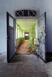 Urban Vegetation by schnotte
