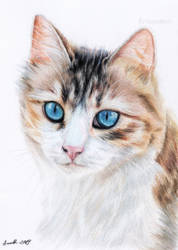 Cat with blue eyes by Anna655
