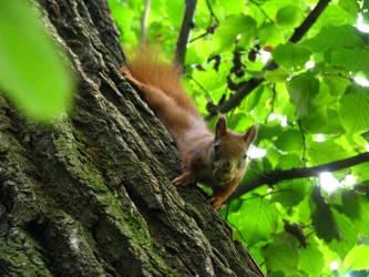 Squirrel 2 by Alextasha