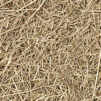 hay straw seamless texture by dbszabo1
