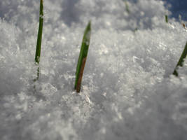 grass by lille-cp