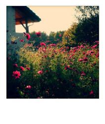 french flora by lovemonstar