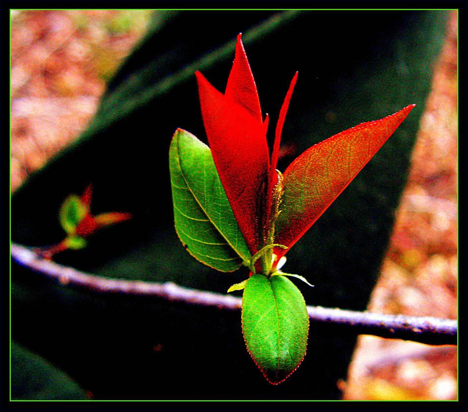 Tree Bud At Last! by surrealistic-gloom