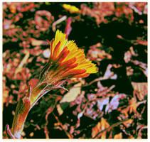 Gloomy Wild Flower by surrealistic-gloom