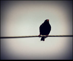 Lonely Bird by surrealistic-gloom