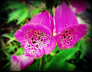 Foxglove Flowers by surrealistic-gloom