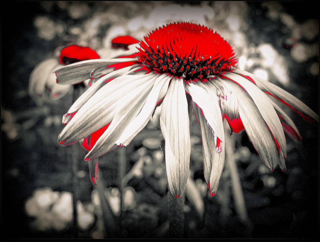 Bleeding Heart by surrealistic-gloom