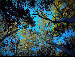 Birch Trees In September by surrealistic-gloom