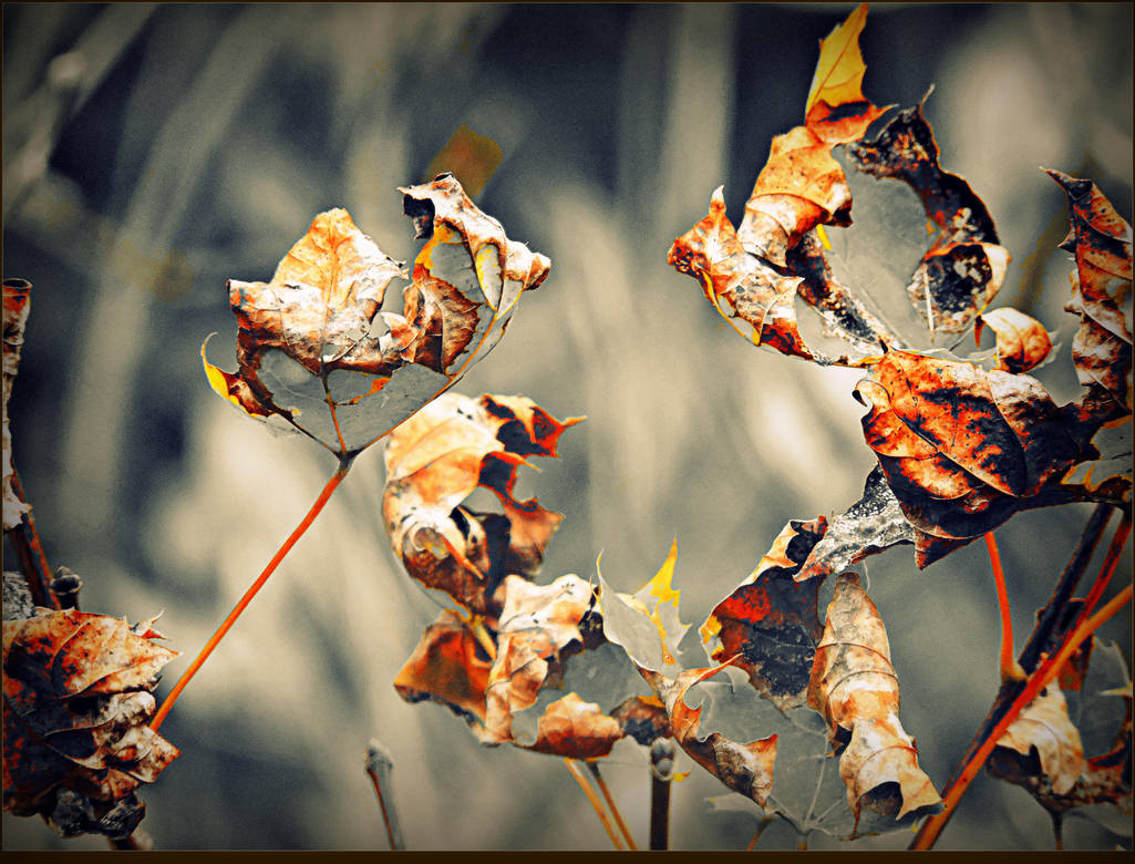 The End of Fall by surrealistic-gloom