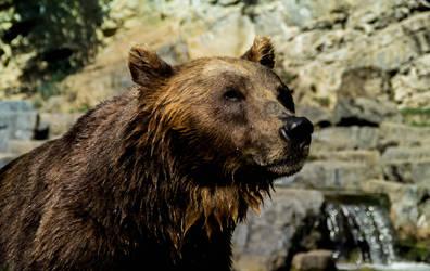 Bear -Grotte de han by Ninie