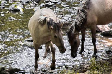 Horses - Grotte de han by Ninie