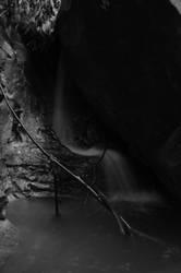 The Branch by Dark-Eye-Photography