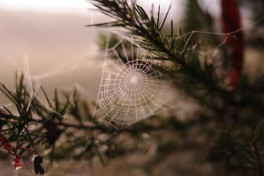 Spiders Web by Dark-Eye-Photography