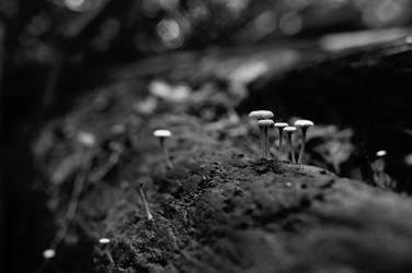 Mushrooms by Dark-Eye-Photography