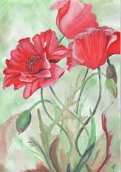 Poppy by azeemb