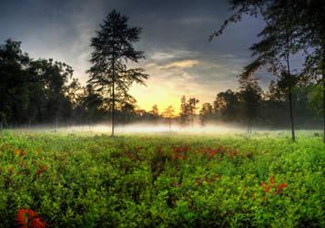 Morning Vapors by Bawwomick