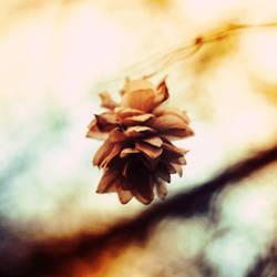 blossom by soheir