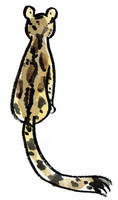 Clouded Leopard by Naoru