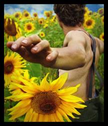 sunflower dream by fahrmboy