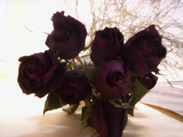 Roses by mechta
