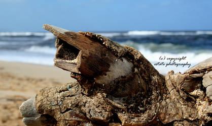 Hawaii 14 by ThruEmilysEyesPhotos