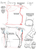 Horse Drawing: Legs by modesty