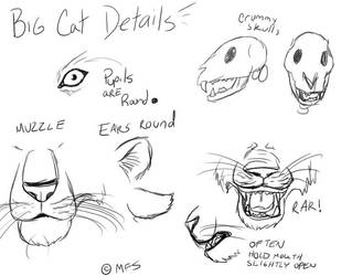 Cat Tutorial: Big Cat Details by modesty