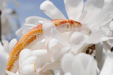 Cooper in flowers pt 3 by PinEyedGirl