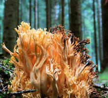 mushroom VI by indojo